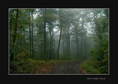 Ma forêt enchanteresse