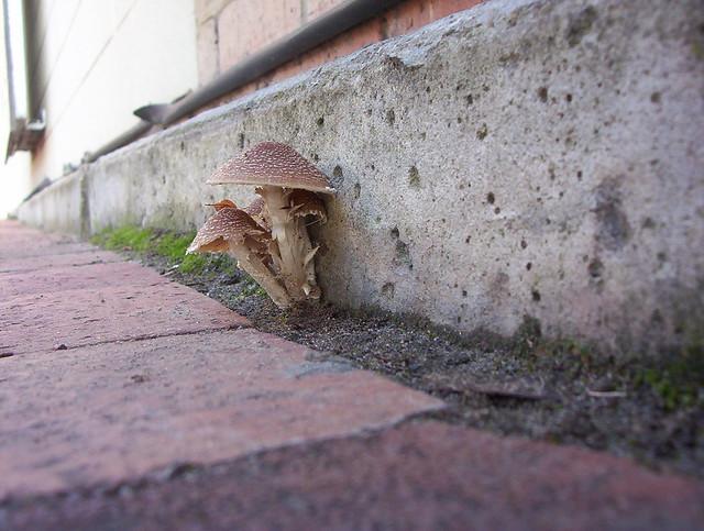 Tiny toadstools