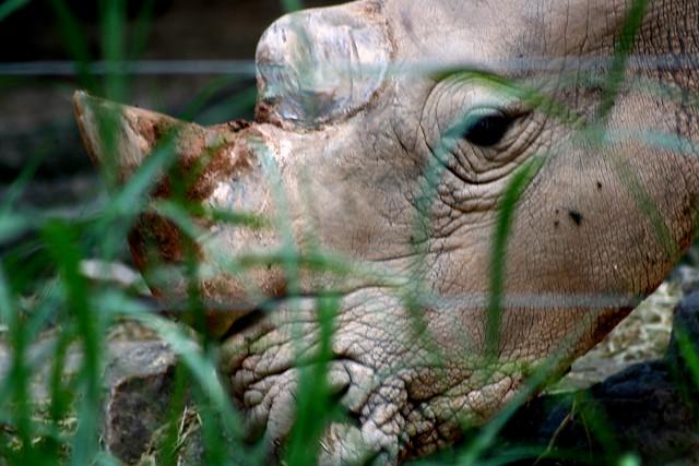 rhino flickr photo sharing