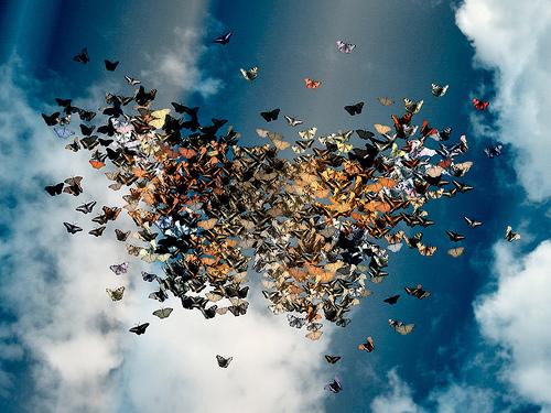 Swarm Of Butterflies Tumblr butterfly swarm | Flic...