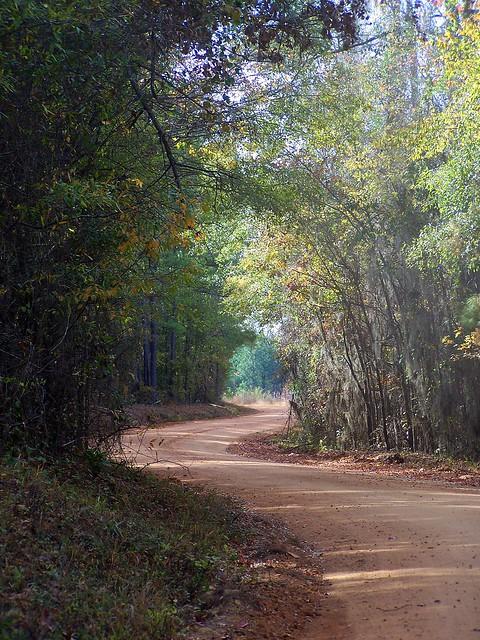 Fall Roadtrip: Drive into Autumn