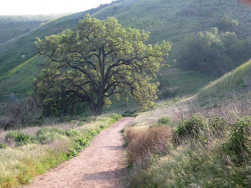Hike las virgenes canyon open space ahmanson ranch for Open space in stile ranch