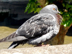 falcon(0.0), animal(1.0), wing(1.0), fauna(1.0), beak(1.0), stock dove(1.0), bird(1.0), wildlife(1.0),