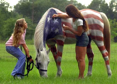 bandeira EUA cavalo