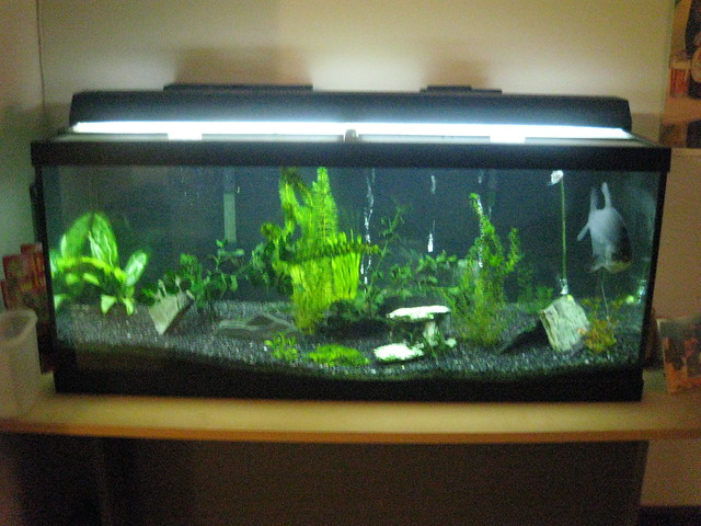 75 gallon fish tank flickr photo sharing for 10 gallon fish tank size