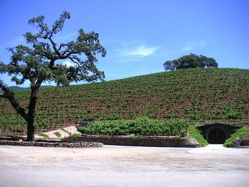 Primer el celler després la vinya a Napa