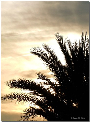 barcelona sky españa sun sol backlight clouds contraluz atardecer evening spain dusk cielo palmtree nubes catalunya palmera garraf againstthelight cubelles supershot flickrsbest mywinners anawesomeshot infinestyle multiplylayers superlativas goldstaraward multiplicarcapas motadesantpere