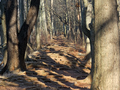 my favorite path