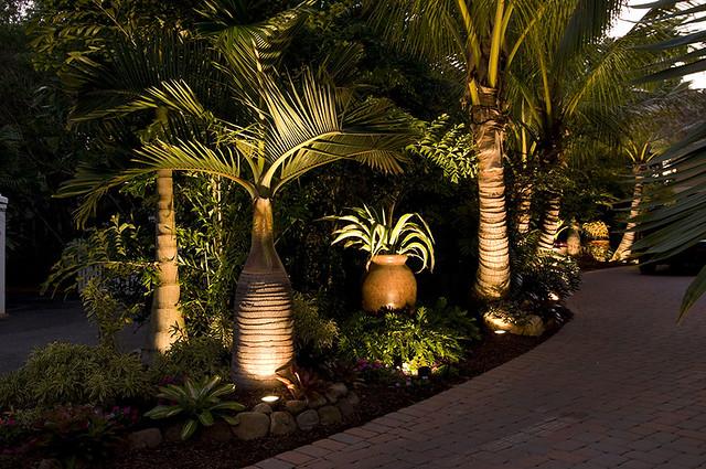 Landscape Lighting Sarasota : Landscaping sarasota florida with tropical palm trees
