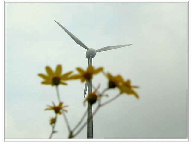 New report explores the potential of India's Wind power market for 2013