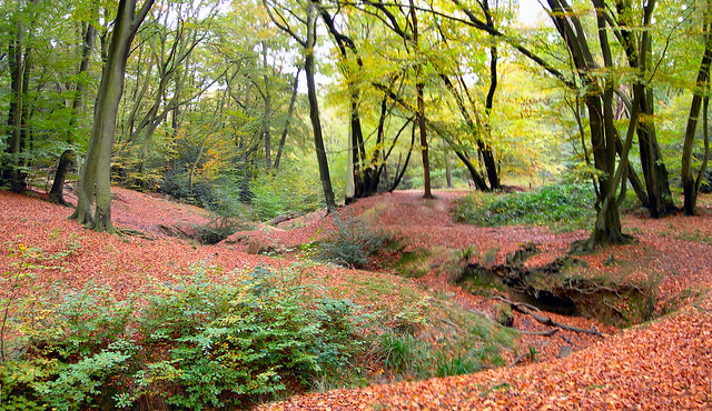 Loughton Brook Epping Forest Flickr Photo Sharing