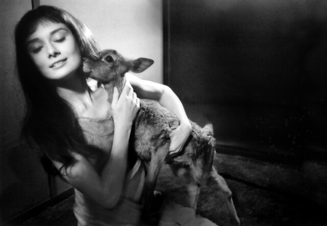 Audrey Hepburn with 'Ip