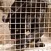 San Diego Zoo 038