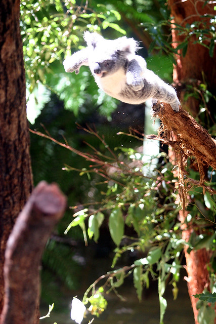 Drop Bear @ Taronga Zoo, Sydney - 23rd February, 2008