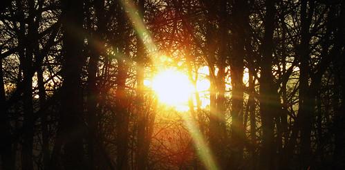 trees light sunset papercut badblankenburg
