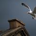 seagull #234251 by Jibbo