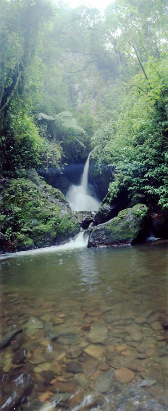 Imagen de una Cascada en el Bosque de Niebla en el Valle de Cocora
