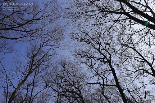 20140226-IMG_6756(新田山緑地)