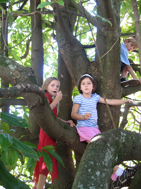 Free Fun Things to Do With Family - Kids in a magnolia at my parents' anniversary party