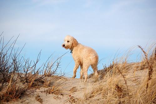 dog beach capecod massachusetts