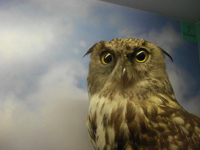 Stuffed Owl Flickr Photo Sharing