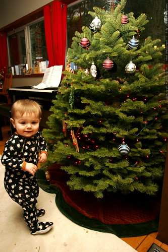 """sequoia sees the tree and exclaims """"light.ssssss!""""    MG 6755"""