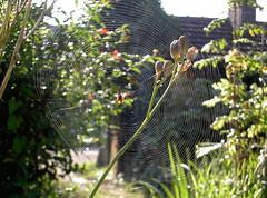 Tanning spider - Photo of Audeloncourt