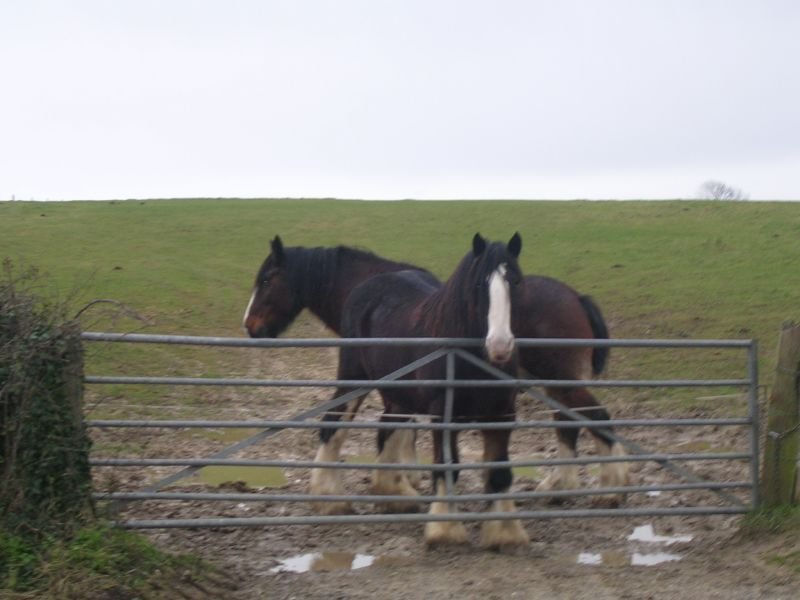 Two shires Petersfield to Rowlands Castle