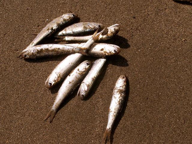 Prehistoric fish washed up on shore - photo#22