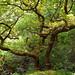 Small photo of Tree in Broadhead Clough