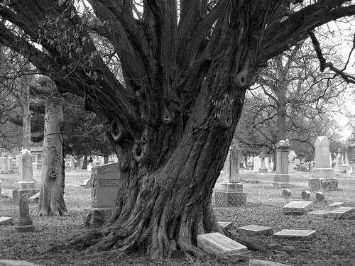 project52 tree crownhill cemetery indianapolis indiana 2017 blackandwhite landscape