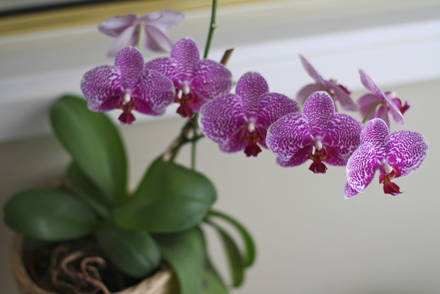Orchids. A few years ago,