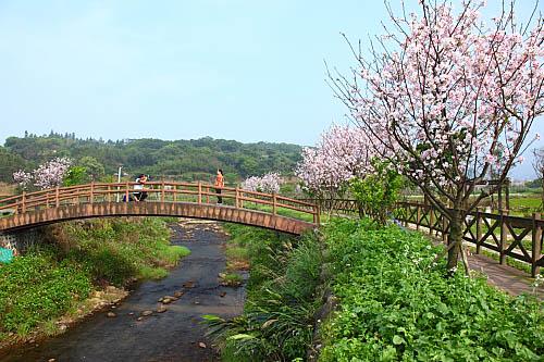 95H5三芝-櫻木花道-三生步道