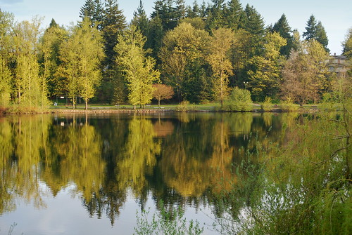 abbotsford bc green milllake nikon80 reflection vista fraservalley tree myview directlyacross season mill lake canada fraser valley landscape trees beautifulbc