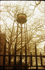 greenpoint water tower and trees