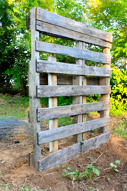 pallet trellis flickr photo sharing