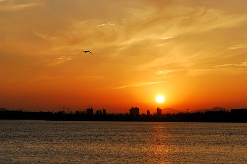 ocean sunset sea sky bird water nikon asia korea busan southkorea 을숙도 낙동강 afs287028d
