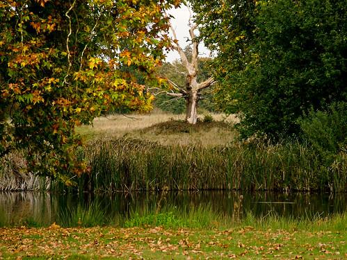 This autumns colours