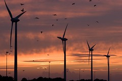 machine, windmill, evening, line, wind, wind farm, wind turbine, dusk, sunset, sunrise, afterglow,