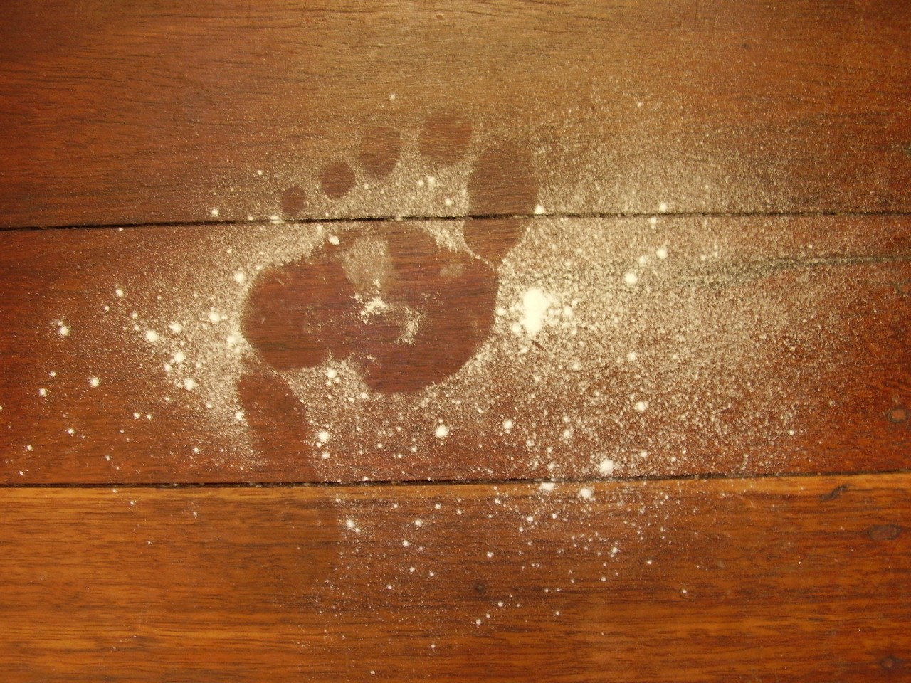 footprint in flour
