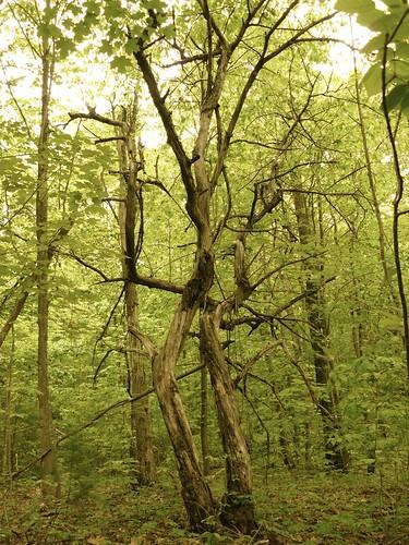 creek driftwood wetlands ravine grasslands charlton mourningkill