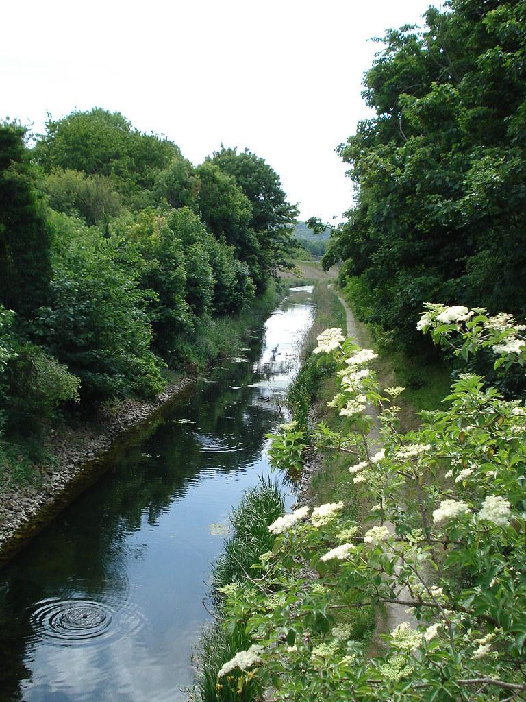 Elder Flowers By Canal