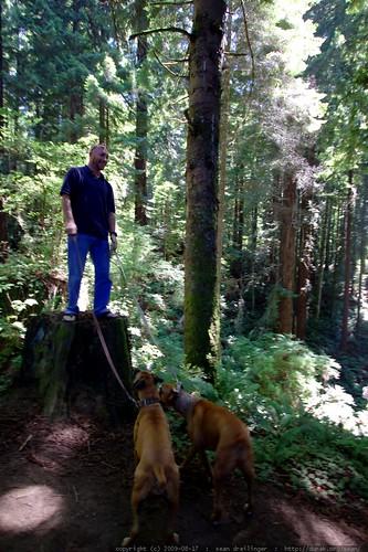 walking in the humboldt redwoods    MG 1127