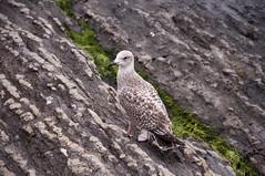 Bird at Bygdøynes