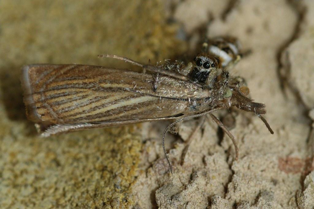 mmm moth