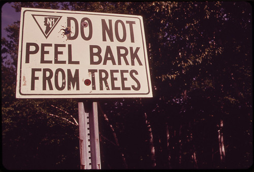 """Sign at the """"Shelburne Birches"""" Area on the Androscoggin River 06/1973 by The U.S. National Archives"""