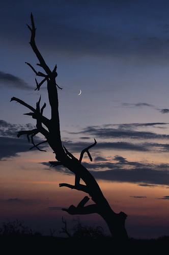 arizona landscape desert tucson scenic scene sonorandesert desertsunset desertsky photocontesttnc09