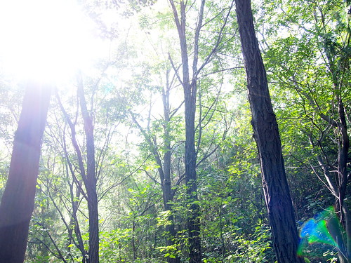 Sunshine in the forest