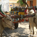 Good Horns - Pondicherry, India