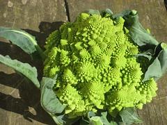 vegetable, leaf, leaf vegetable, green, produce, food, broccoflower,